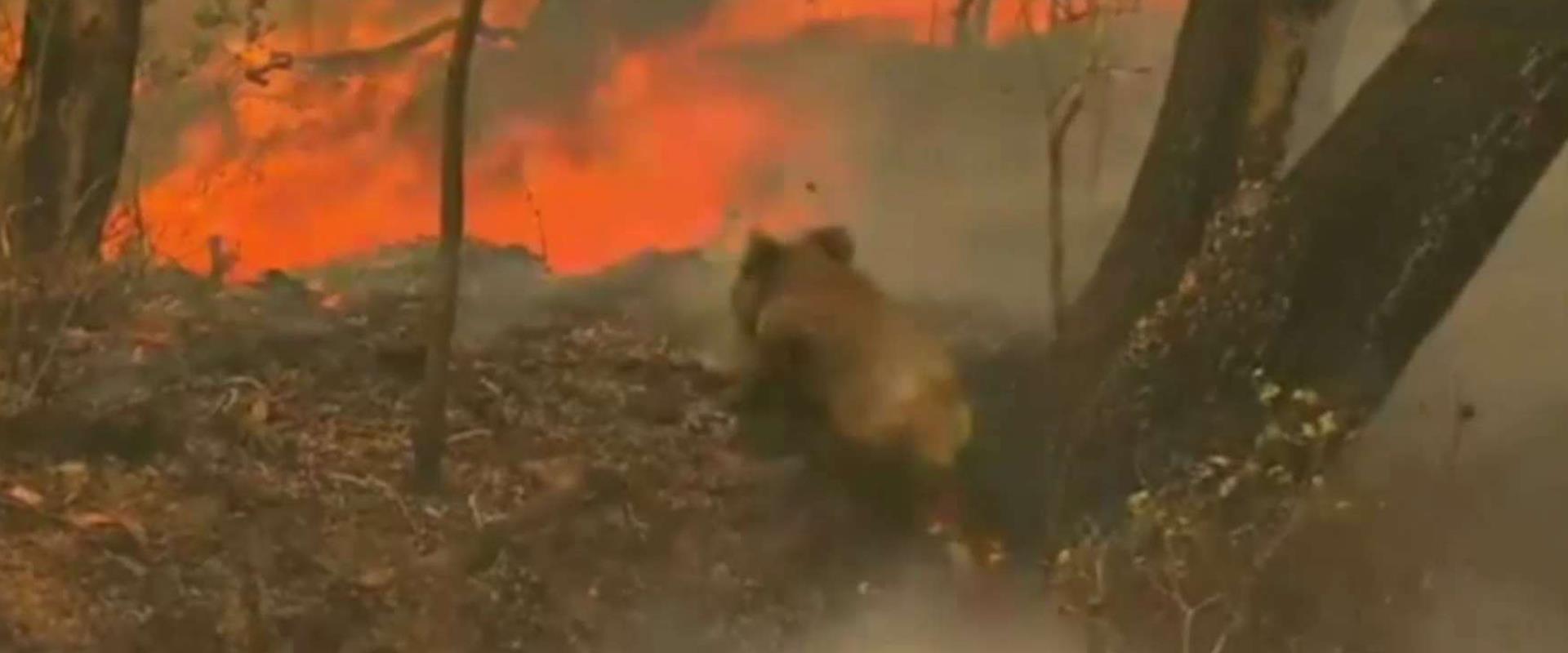 השריפות באוסטרליה משתוללות זה שבועיים