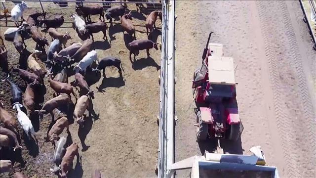 חוות בקר באוסטרליה