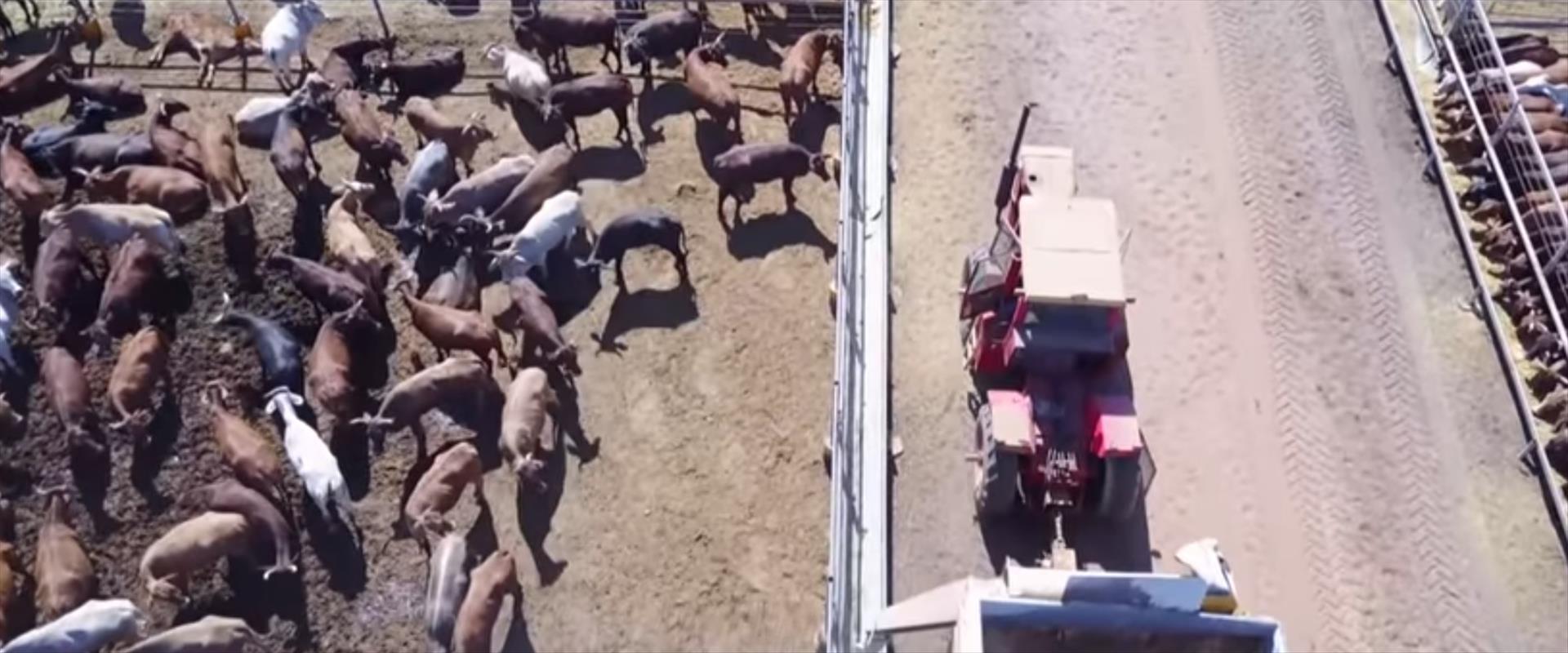 חוות בקר באוסטרליה, בה תועדה התעללות בתחקיר כאן חד