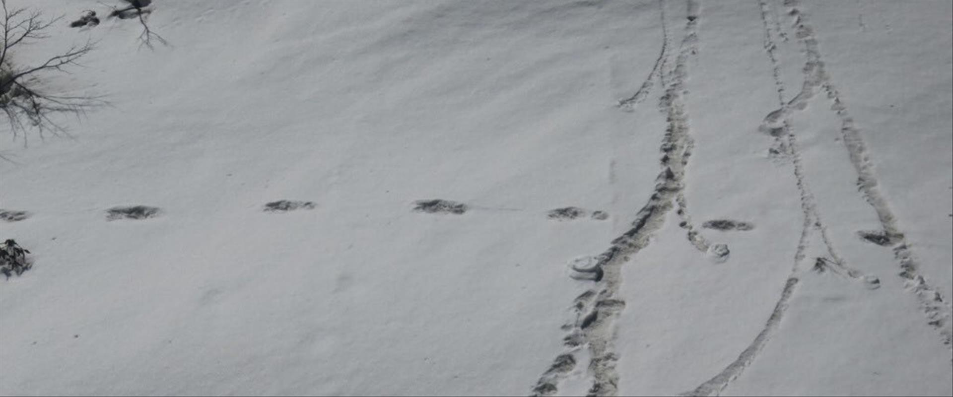 עקבות איש השלג