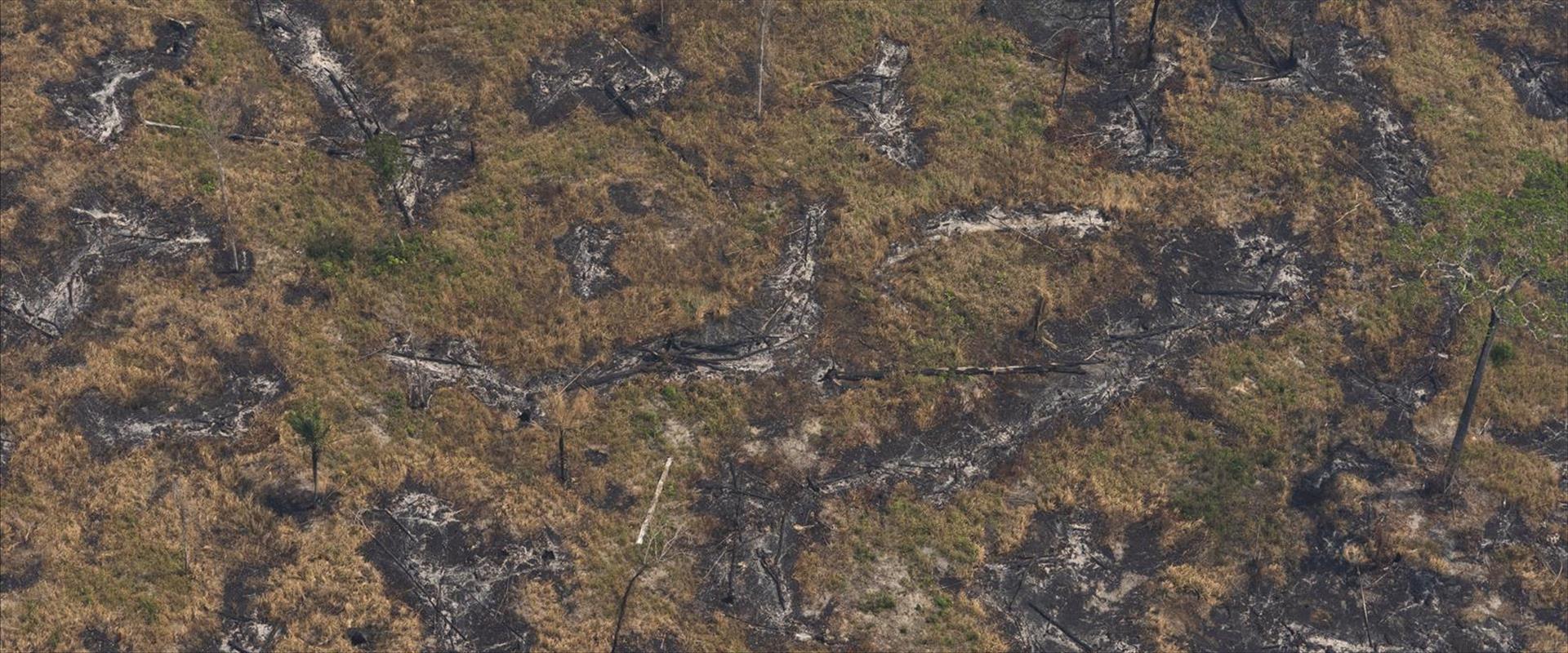 נזקי השריפות ביערות האמזונס. ברזיל, 23.8.19
