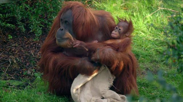 החיים הסודיים של גן החיות | עונה 6 | פרק 2