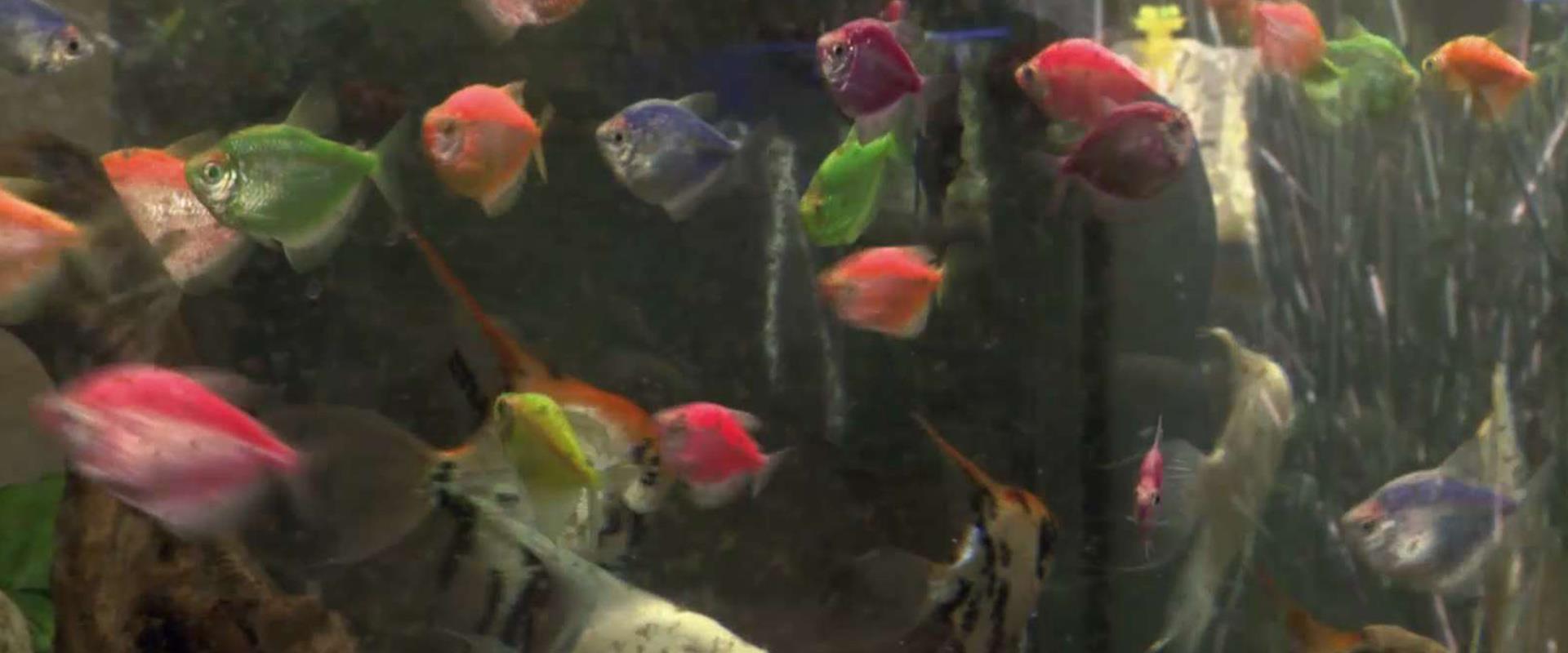 """""""הם לא מדברים וזה טוב לי"""": הישראלים שמשוגעים על דג"""
