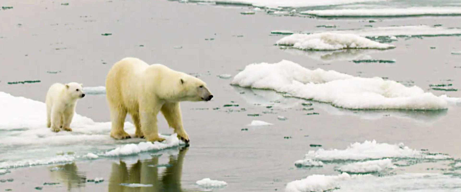 הקרחונים בקוטב נמסים