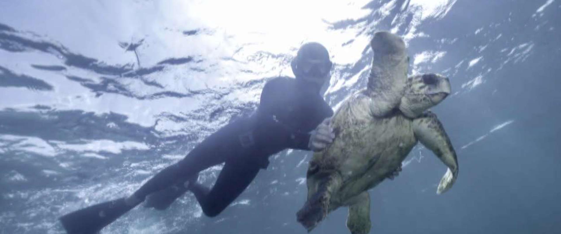 חילוץ בלב ים: הצוללנים שהצילו את חייו של הצב