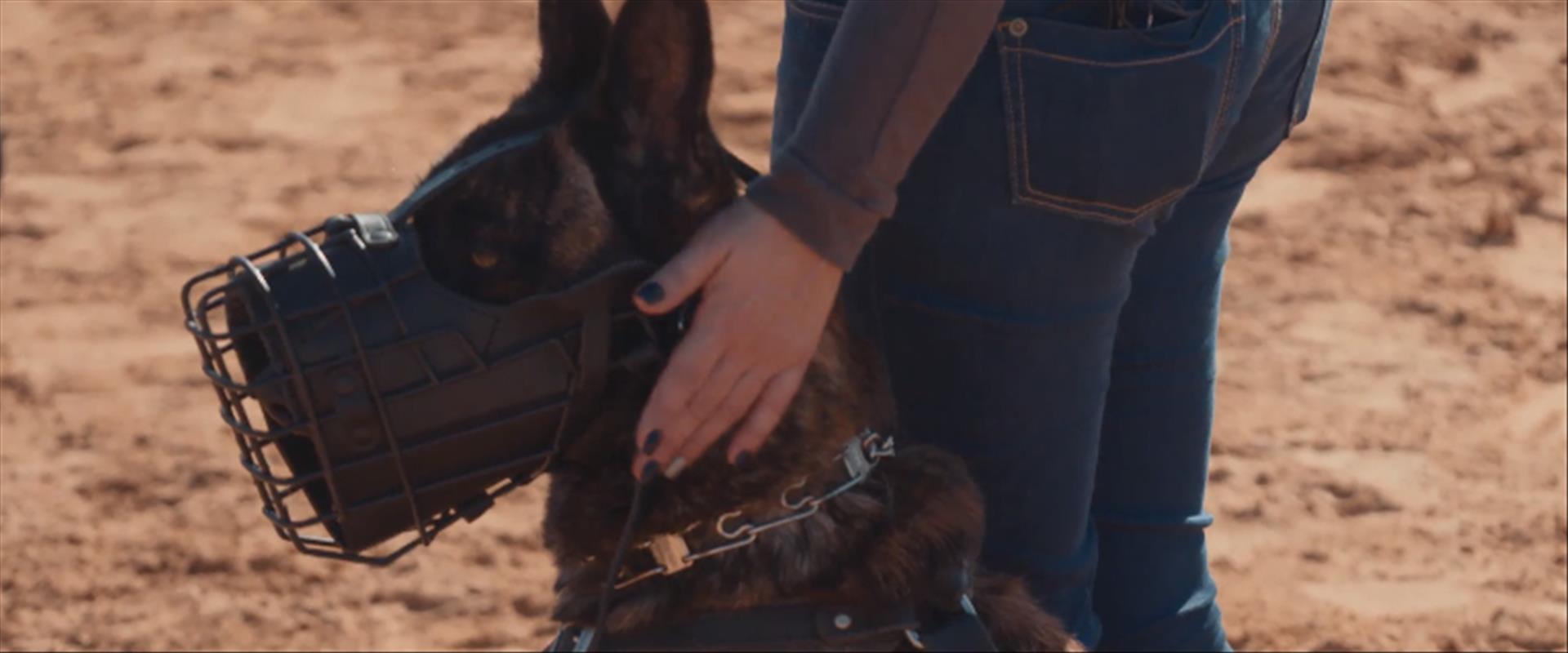 כלבי הגנה בזמן אימון