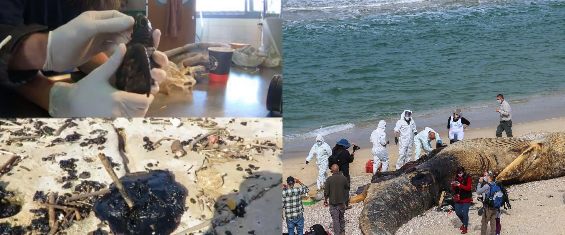 זיהום הנפט בחופים