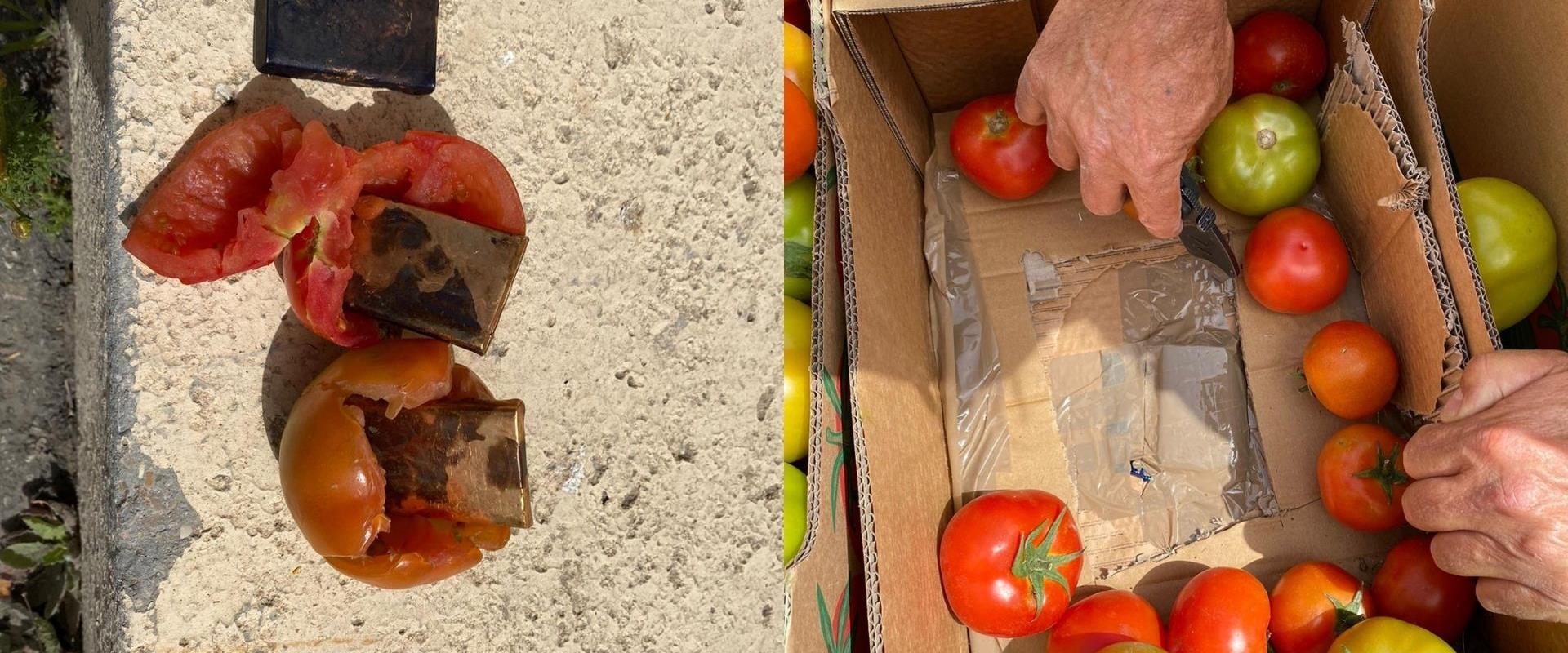העגבניות שנתפסו, היום