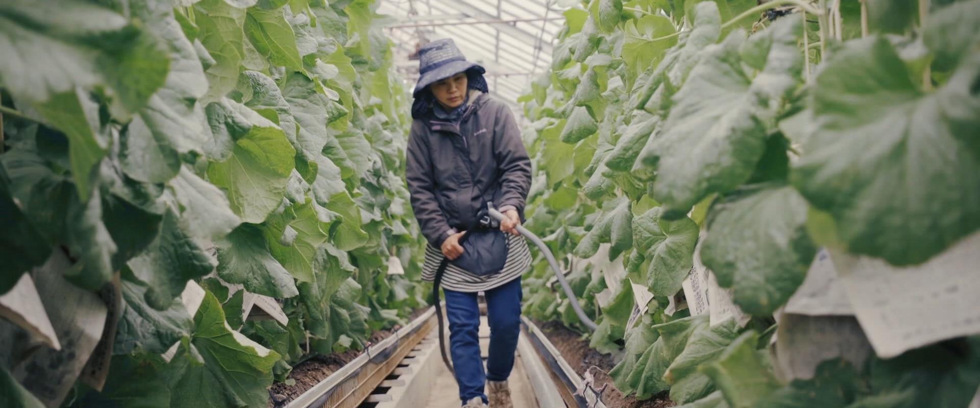 יפן למתקדמים | פרק 2 - חיים כדי לעבוד