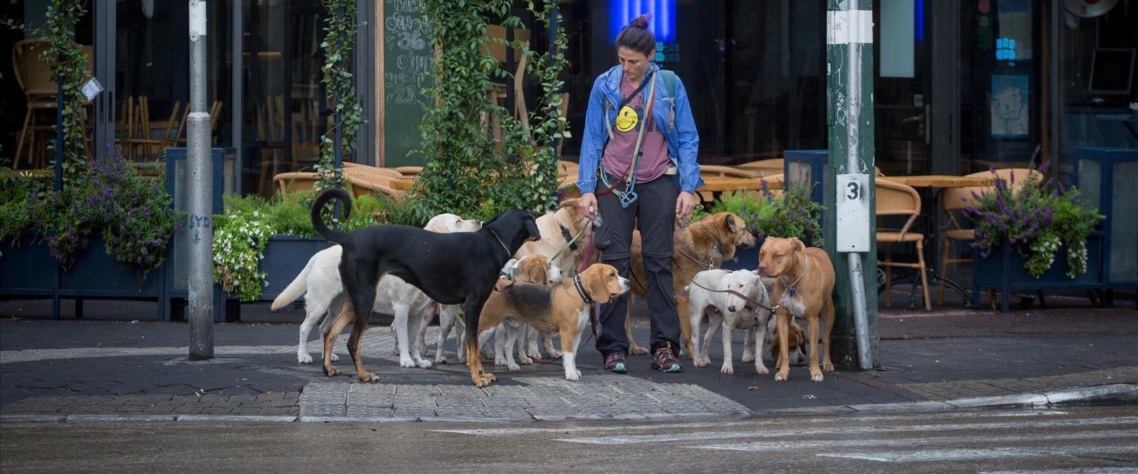 כלבים בתל אביב, ארכיון