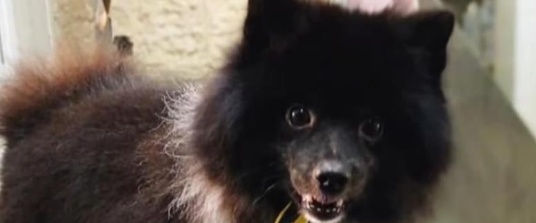 חן ביאר – עוקץ הכלבים
