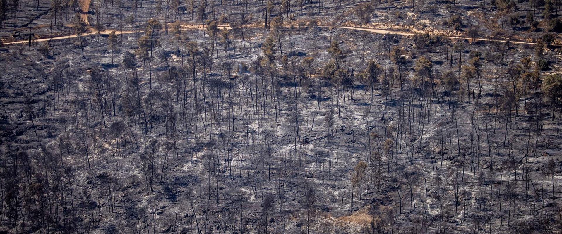 הרי ירושלים לאחר שריפת הענק